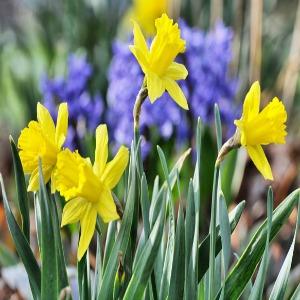fleurs en mars