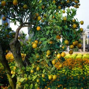 arbre-arbuste-fruit-taille